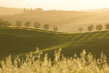 Tuscany (Italy)