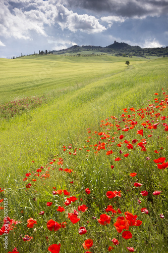 Poppies on a meadow