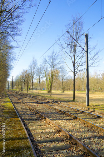 Tram tracks along a forest