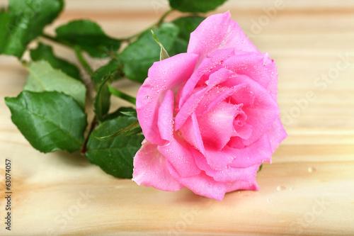 Róża różowa na deskach.