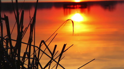 Sunset through the reeds,sunset over the river