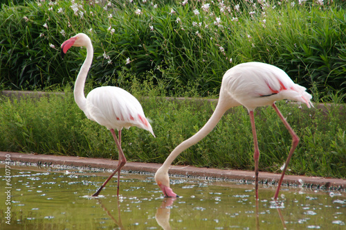 canvas print picture Flamingos