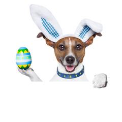dog easter bunny