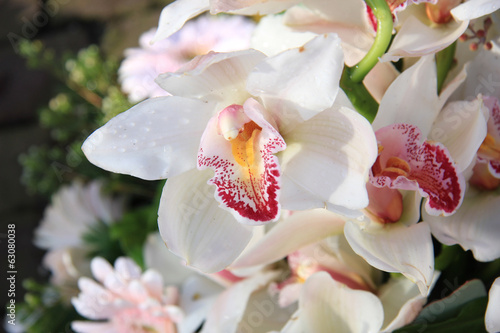 White cymbidium orchids
