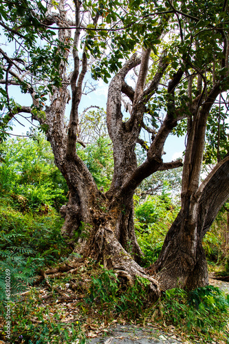 photography of an old tree in the jungle