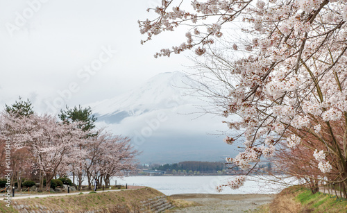 Mount Fuji in springtime decorates by pink cherry blossoms
