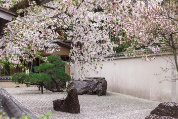Zen garden Japanese style decorates by pink cherry blossoms