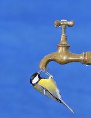 Thirsty bird.