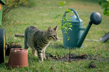 chat curieux dans son jardin