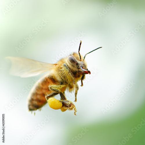 Foto op Canvas Bee flying honey bee