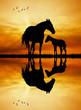 Obrazy na płótnie, fototapety, zdjęcia, fotoobrazy drukowane : horses silhouette