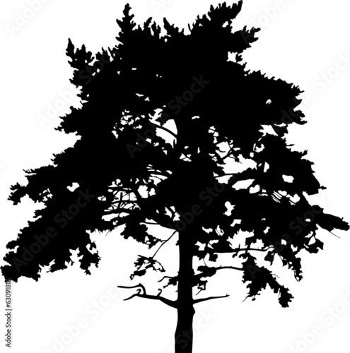 pine large tree black silhouette illustration