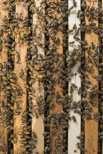Honey Bees Working