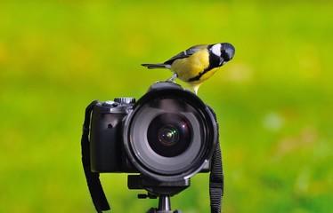 Curioso pájaro.