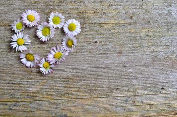 Gänseblümchen Holzhintergrund