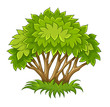 Bush with green leaf. Eps10 vector illustration. Isolated