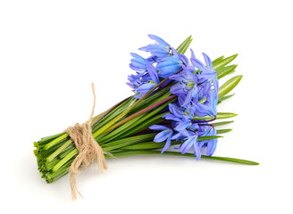 Bouquet from scilla.