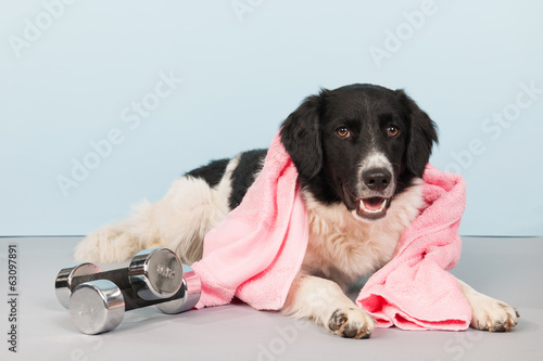 Dog with dumbbells and towel
