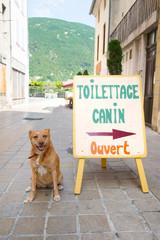 Dog toilet in France