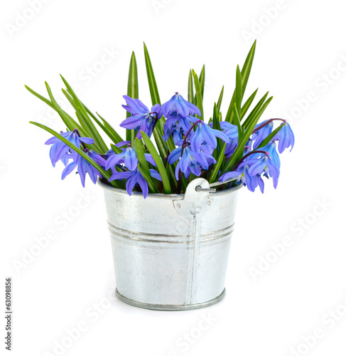 Bouquet from scilla in a small bucket.