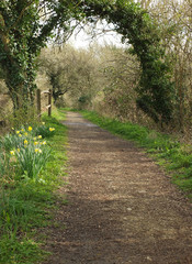 Path through woodland