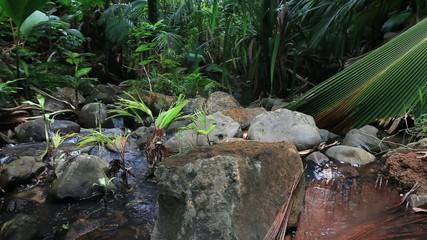Creek in the Jungle