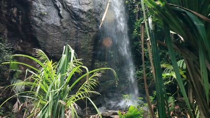 Jungle Landscape with Waterfall