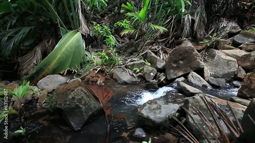 Creek in the Jungle