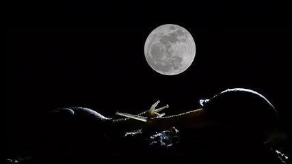 timelapse de caracol con luna llena