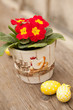 Easter eggs and primula flower