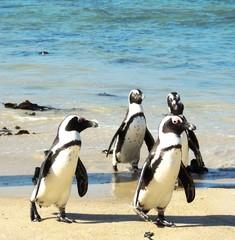 penguins squad