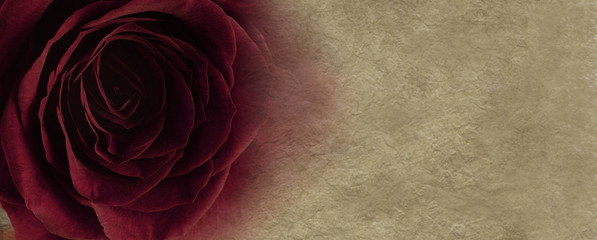 Sultry Red Rose Website Banner