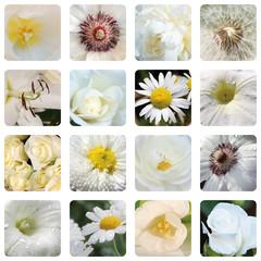 weiße Blumenblüten