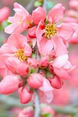 Spring flowers closeup with pink blossom