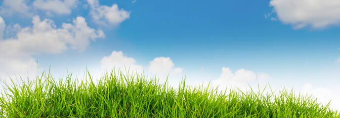 Spring nature background with grass and blue sky in the back .su