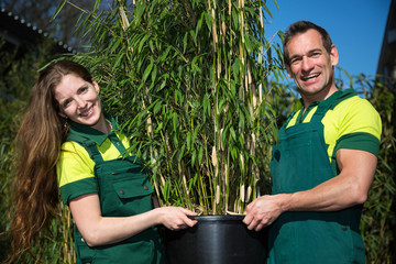 Gardeners posing with potted bamboo plant at nursery