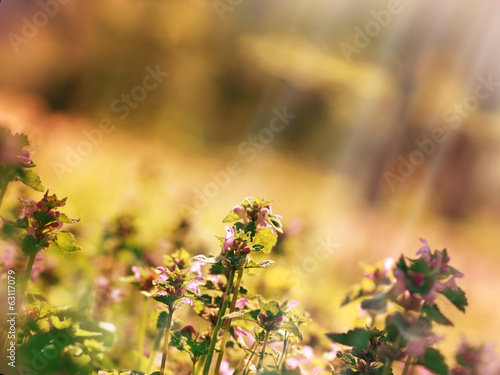 Meadow flower in spring
