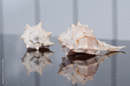 Seashells with striped background
