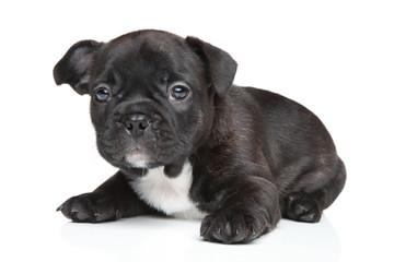 French bulldog puppy (1 month)