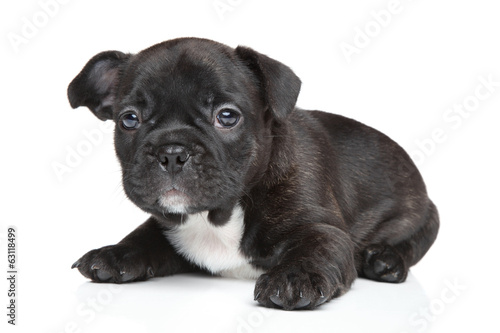 canvas print picture French bulldog puppy (1 month)