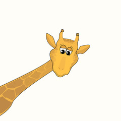 giraffe on a light background