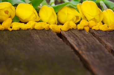 Gelbe Tulpen und Dekosteine auf Holz