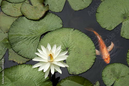 Fish in a Lotus pond - 63130813