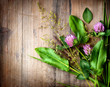 Spring Herbs over Wooden background. Herbal Medicine