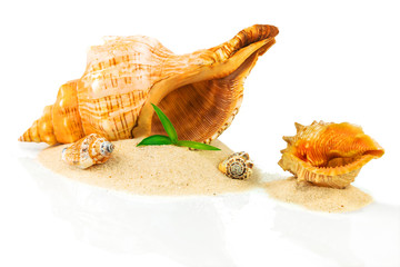 Spa concept with seashells and bamboo