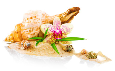 Spa concept with seashell and orchid