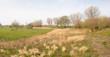 Landscape in springtime