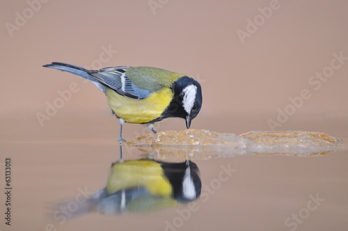 Reflection bird.