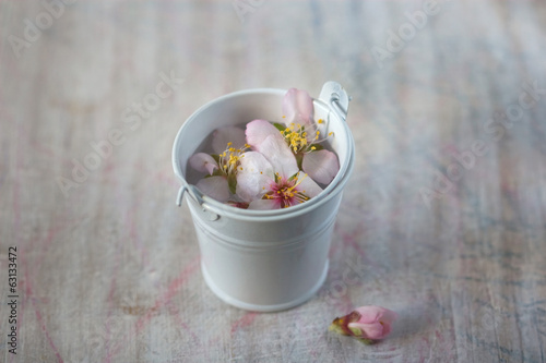 delicate spring flowers in decorative bucket