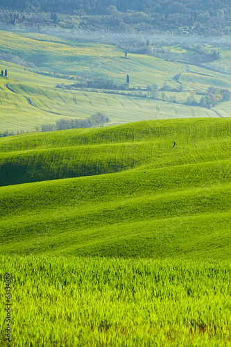 Beautiful green hills in Tuscany, Italy.